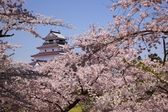 Aizuwakamatsu Castle and cherry blossom — Stock Photo