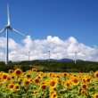 Sunflower field with windmill — Stock Photo #18664647