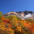Mountain autumn leaves — Foto Stock
