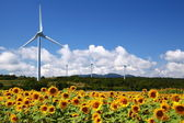 Sunflower field with windmill — Stock Photo