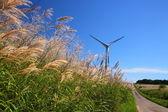 Grama prateada com moinho de vento — Fotografia Stock