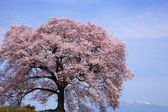 Wanitsuka no sakura with Mt.Yatsugatake — Stock Photo