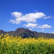 Rapeseed field and mountain - Stock Photo