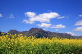 Rapeseed field and mountain — Stock Photo