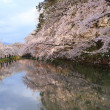 Stock Photo: Moat and cherry blossoms