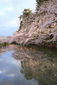 Moat and cherry blossoms — Stock Photo