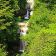 Waterfall of fresh green — Stock Photo