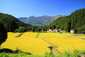 Japan Alps and rice field — Stockfoto