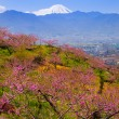 Peach tree and Mt. Fuji — Stock Photo