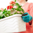 Female hands planting — Stock Photo