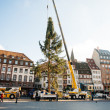 Strasbourg Christmas Tree Erected — Stock Photo