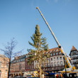Strasbourg Christmas Tree Erected — Stock Photo #34841199