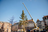 Strasbourg Christmas Tree Erected — Stock Photo