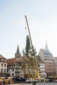 Strasbourg Christmas Tree Erecte — Stock Photo