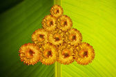 Christmas Treen made from flowers — Stock Photo