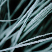 Ice hoarfrost on grass — Stock Photo