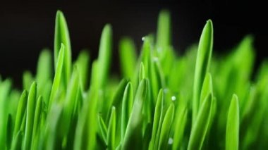 Green fresh grass background — Stock Video