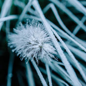 Close-up of frost on plant and grass — Stock Photo