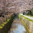 Philosopher's path in Kyoto — Stock Photo