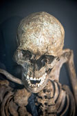 Das menschliche skelett — Stockfoto