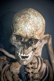 Människans skelett — Stockfoto