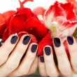 Closeup hands with dark manicure holding bright red flowers - Stock Photo