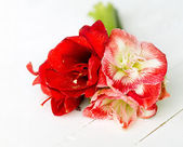 Delicate flowers for special occasion — Stockfoto