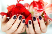 Closeup hands with dark manicure holding bright red flowers — Stock Photo