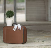 Still life with retro suitcase and myrtle tree — Stock Photo