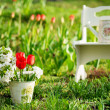 Garden view with utensils and red tulips - Stock Photo