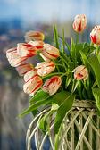 Red and white beautiful tulips closeup — Zdjęcie stockowe