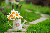 Watering can with yellow narcissus — Stockfoto