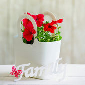 Still life with red flowers — Stock Photo