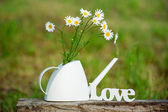 Still life with white daisies — Stock Photo
