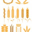 Stock Vector: Set of wheat collection