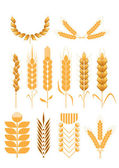 Set of wheat collection — Stock Vector