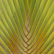 Green palm tree leaf as a background — Stock Photo #20038881