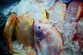 Bunch of raw frozen fish on ice. Thai sea food. — Stock Photo