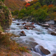 Mountain river on autumn — Foto Stock