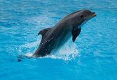Saltando golfinhos — Fotografia Stock