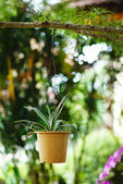 Hanging Garden. A flower pot, hanging on bench in the park. Cont — Stock Photo