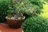 Ceramic planter with pink flowers on summer patio — Foto de Stock