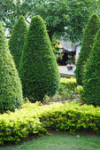 Landscaping in the garden — Stock Photo