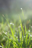 Fresh green grass with water drops in morning sun rays — Stock Photo