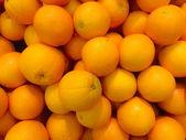 Many citrus fruits — Stock Photo
