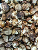 Close up of mushrooms — Stock Photo