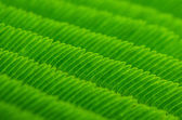 Green leaves pattern — Foto Stock
