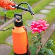 Protecting plant from vermin with pressure sprayer - Stock Photo