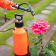 Protecting plant from vermin with pressure sprayer — Photo