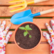 Spring in the garden, potting flowers - Stockfoto